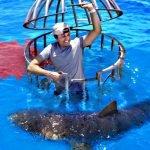 How Do Sharks Like Human Blood vs. Fish Blood?